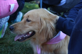 2016-10-07 018 Dog Therapy
